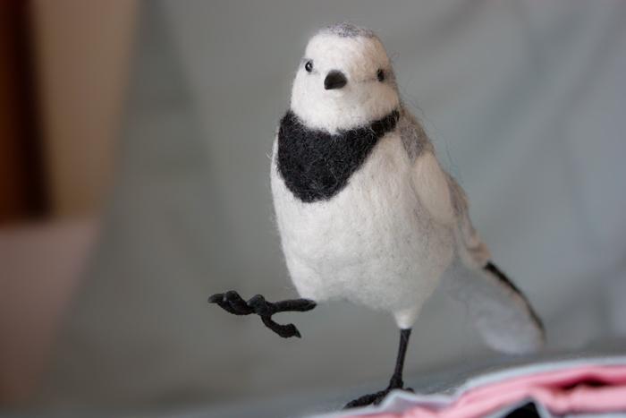 ハクセキレイ-メス(冬羽)
