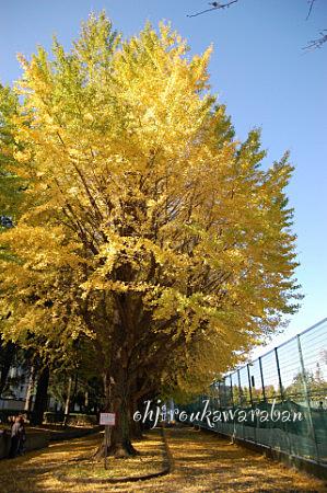 黄金色の絨毯03