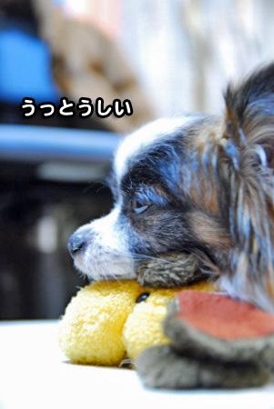 けだるい男04