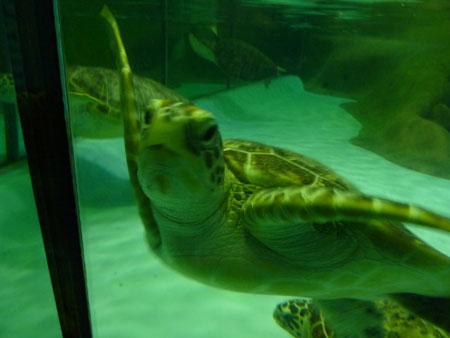 海の生き物は長生き