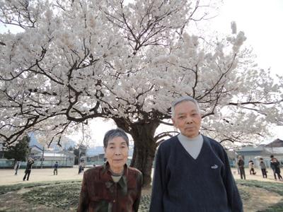 桜の木の下で…