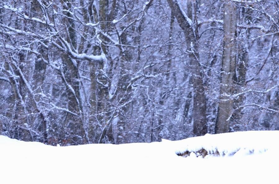 雪景色1.22 093s