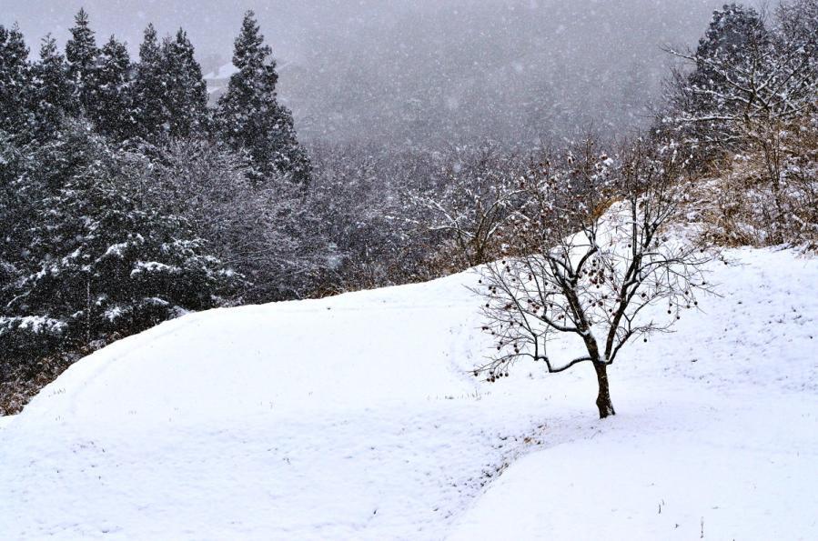 雪景色1.22 136s