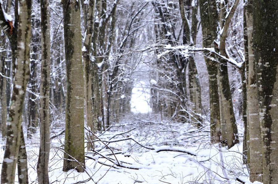 雪景色1.22 113ss