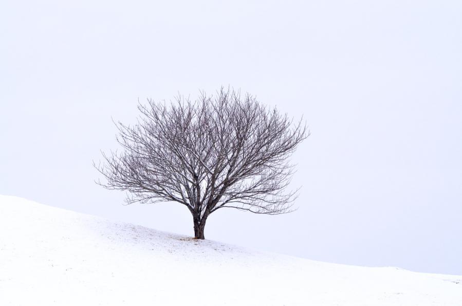 雪景色1.22 181s