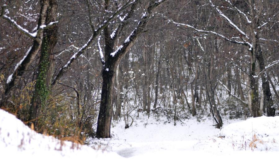 雪景色1.22 196ss