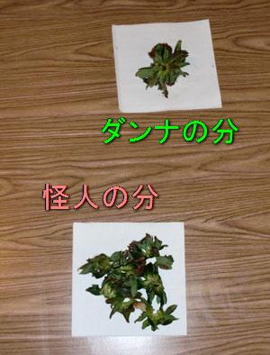 chocostrawberrie.jpg