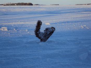 frozensquirrel2.jpg