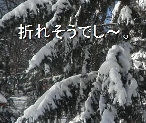 snow0210104.jpg