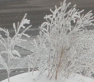 snow0212102.jpg