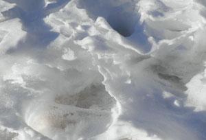 snow0301105.jpg