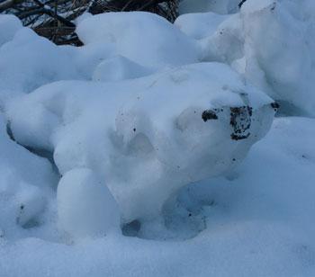 snow1202108.jpg