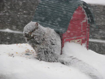 snow1211103.jpg