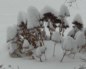 snow1224092.jpg