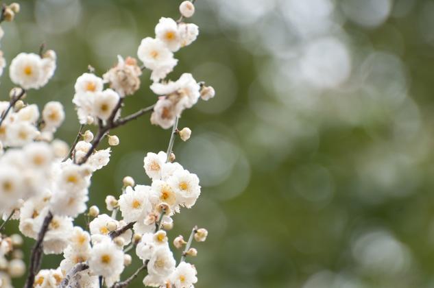 湯島天神梅祭り1