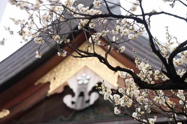 湯島天神梅祭り2
