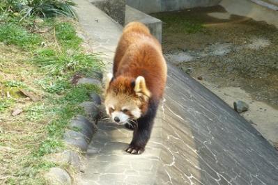 20120320大牟田市動物園 (8)