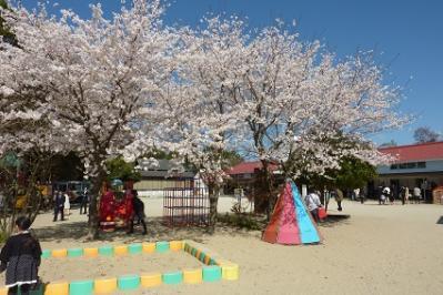 20120407入園式ダンズ (6)