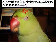 ブログ用 3261