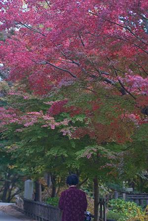 東山植物園3-6