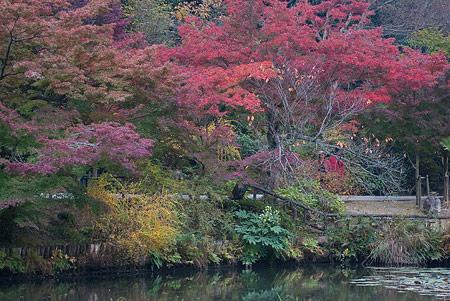 東山植物園3-7