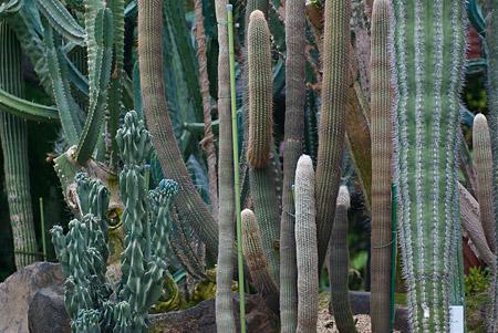東山植物園3-12