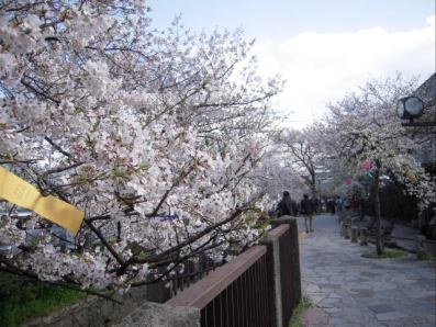 桜並木1・400