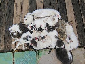 Cats a lot