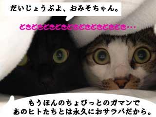 omioko_100128_2.jpg