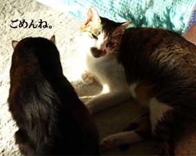onigiri100309_2.jpg