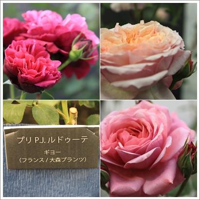 新しいバラの風2