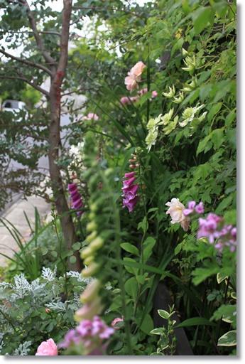 南面花壇1
