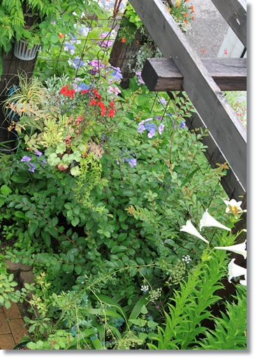 上からの庭2