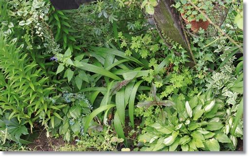上からの庭3