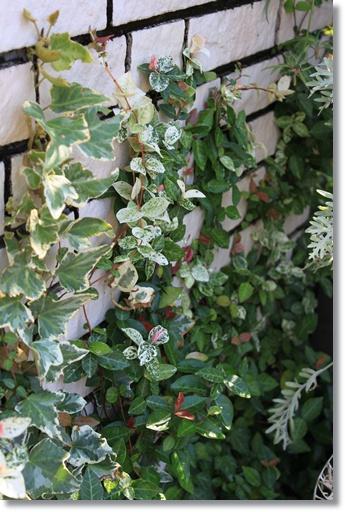 葉っぱの花壇3
