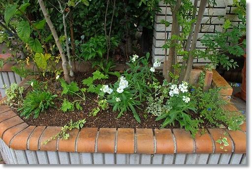 花壇模様替え 4