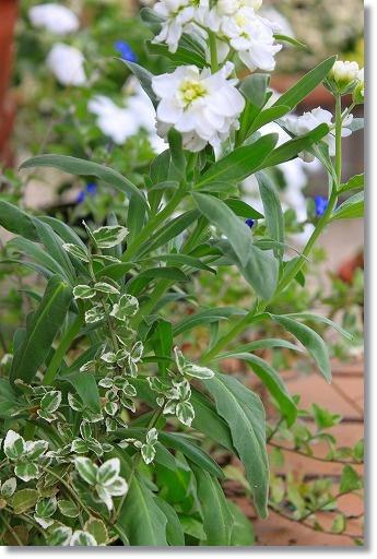 花壇植え替え 2