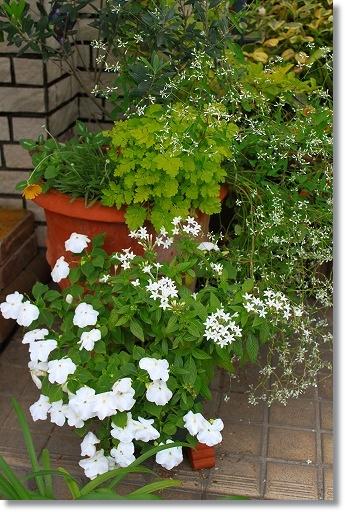花壇模様替え 5