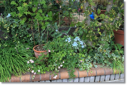 南面花壇 4