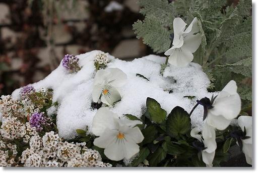 雪化粧 1