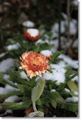雪化粧 2