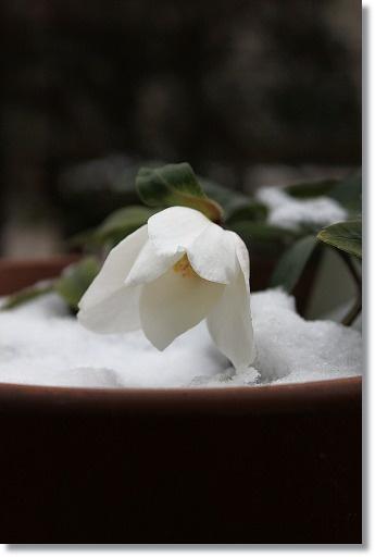 雪化粧 5