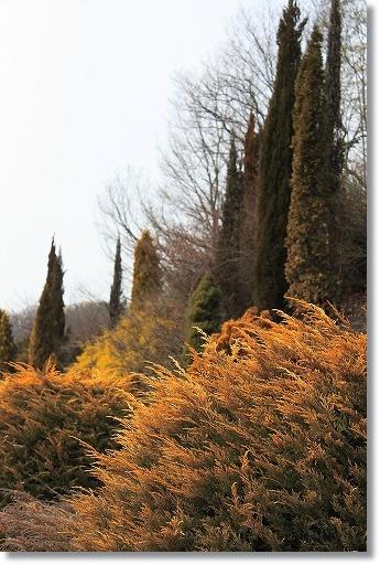 花フェスタ記念公園 1