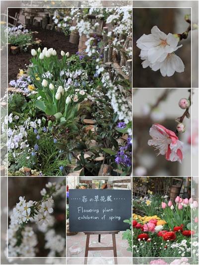 春の展示 1