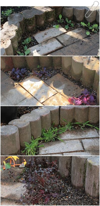 花壇リフォーム