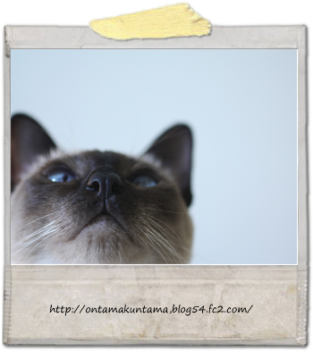 cat10060601