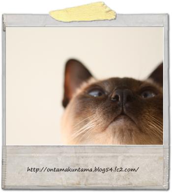 cat10060602