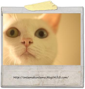cat10070201