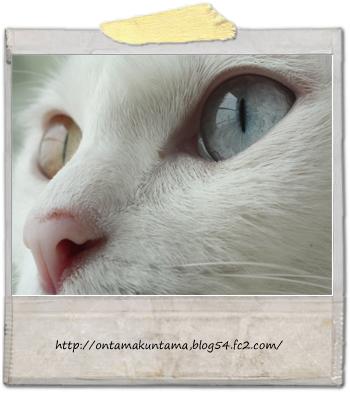 cat10071501.jpg
