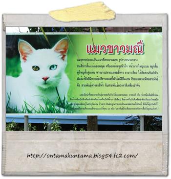 cat10082401